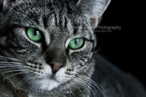 Green eyed Kitty by OfficialSerenaStar
