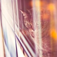 Untitled Cat Photo by nprkr