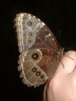 Butterfly 2 by Cynthetic