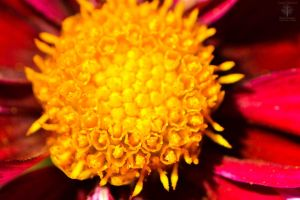 A Burst of Yellow by WickedOwl514