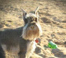 Sand on nose by clotus