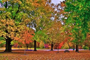 Just Another Fall Park -HDR- by tripptaylor