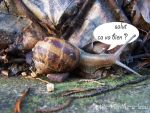 un escargot by pTiTe-MeNtHe-A-lEaU