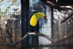 Keel-Billed Toucan by ManitouWolf