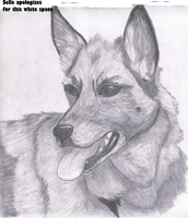 German Shepherd by SeLLeRockZ