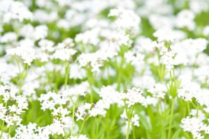 Meadow stock by Quinnphotostock