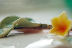 cup-flower5... by TheRedGirl