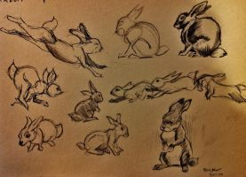 Rabbit Study by HayNateHaywood