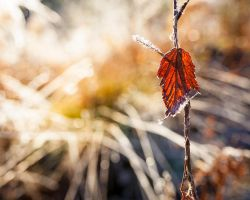 Leaf by JuhaniViitanen
