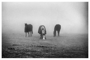 Horses in the Fog 3 by mant01