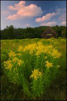 Country Barn and Goldenrod by joerossbach