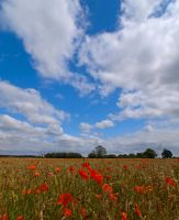 Poppy Flowers Field Yorkshire by davepphotographer