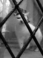 Cat behind bars by Jules-one