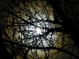 Forged Visions Moon Thru Tree by ForgedVisions