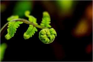 Baby Fern by jaybrar