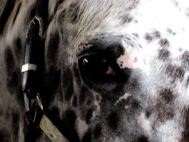 Appaloosa Eye by spookhorse