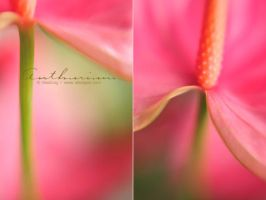 Anthurium - Lensbaby 2.0 by AlexEdg