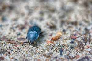 Observing Grains of Sand by dARkEnStONe