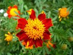 yellow orange flower by Andrea1981G