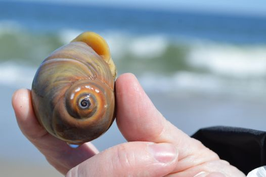 Snail Curls by That-Photographer