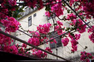 Blossoms overhead by elise451