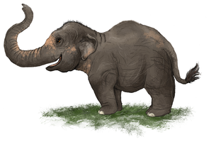 Asian Elephant by painted-flamingo