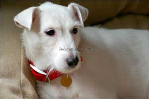 The Real Brian Griffin 2 by KWilliamsPhoto