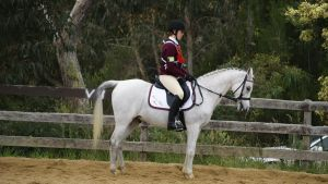 Cannibal Creek Dressage - GTM 2 by Valmanther