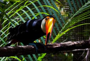 Tucan by Jay-Sia