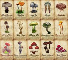 Mushroom Poster by turp