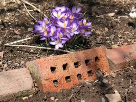 Bricks and flowers by Critterinthedryer