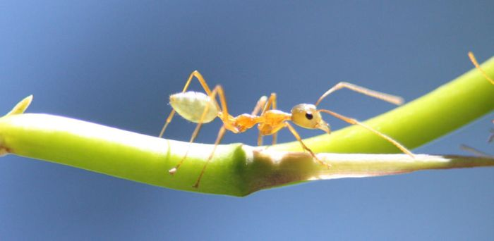 green ant by saggers