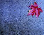 leaf wall paper by spider2544