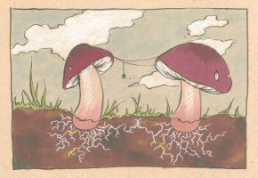 Mushrooms by Longhair