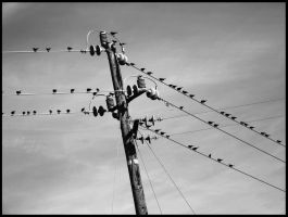 Telephone Wire Tales by mightystag
