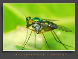 fly6 by dhead