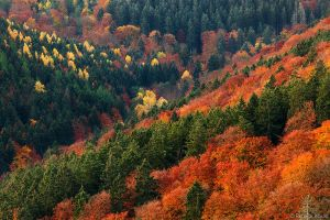 Autumnal valley view by functionizer