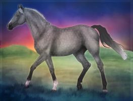 SHF Lady In Lace by WB-Equine-Art