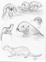 Life Drawing - Otters by KicsterAsh