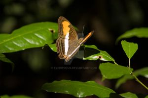 brown orange and white by EyeInFocus