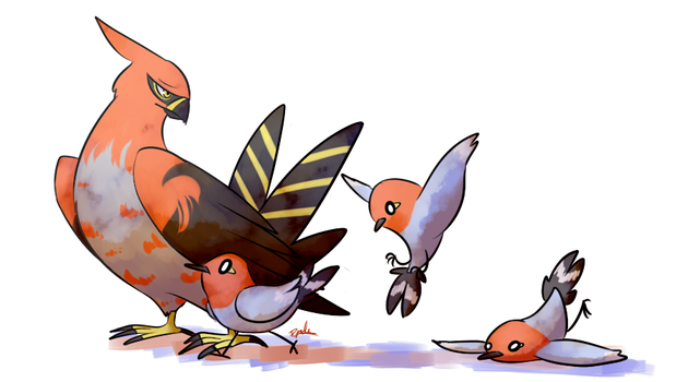 Talonflame and Fletchling by Pidoodle