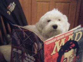 Charlie loves mad mag by SavzthePixie