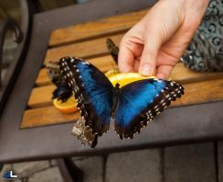 Butterfly Moments...hand fed by imonline
