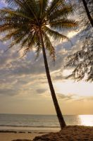 Palm sunset by Tschisi