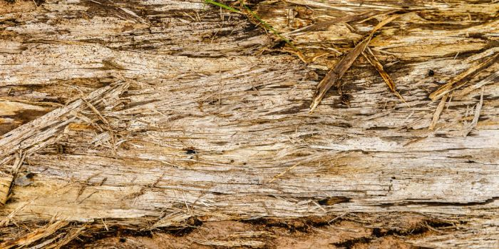 Rough Wood Texture Stock by redwolf518stock
