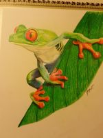 Red eyed tree frog by hegetom