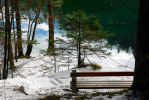Bench in forest by markopu9