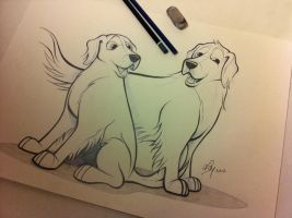 Golden Retrievers Caricature Sketch by timmcfarlin
