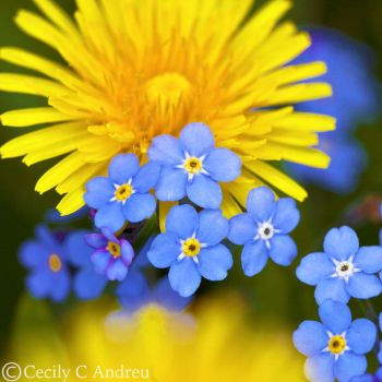 Blue and Yellow by CecilyAndreuArtwork