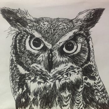 Better quality of owl pic by orangpls